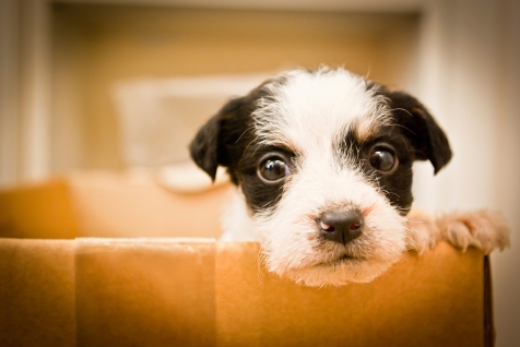 SPCA-VIR2-15-CampaignVisual.jpg